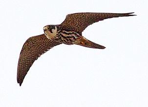 Hobby by Andrew Moon