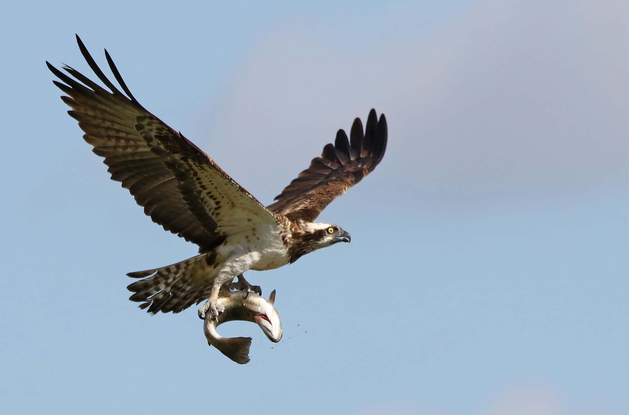Herts Bird Club | Herts Bird Club Welcome